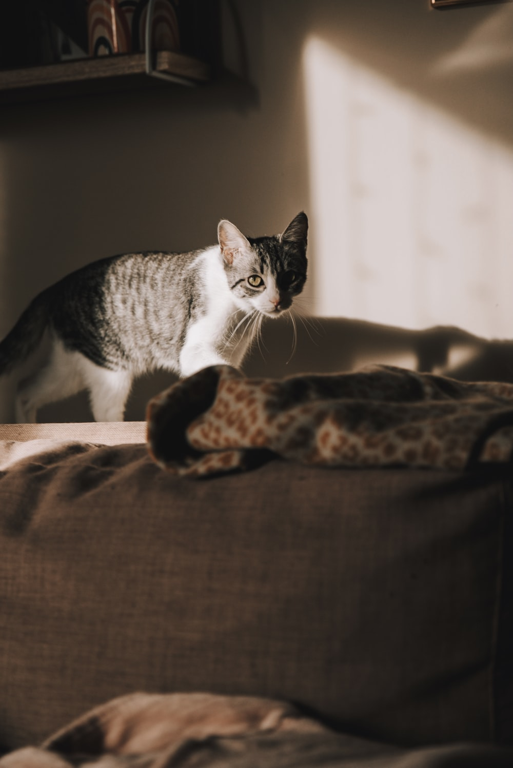 white and black cat on brown textile