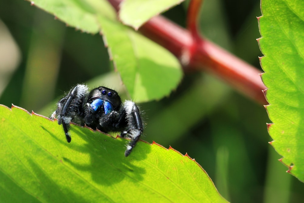 black and blue bee on green leaf during daytime