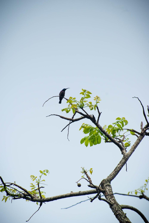 black bird on green tree branch during daytime