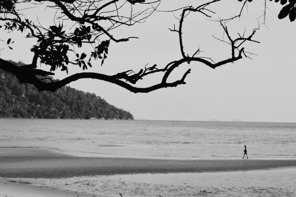 grayscale photo of leafless tree on beach