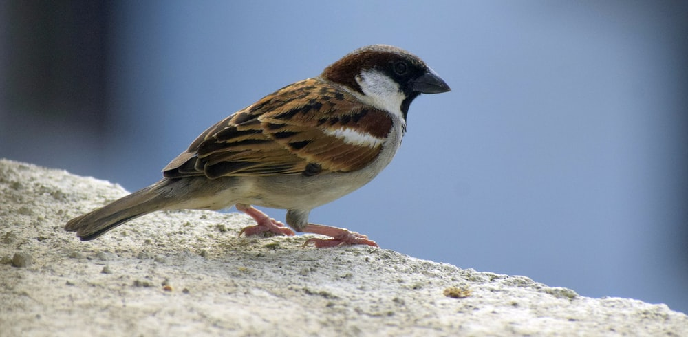 brown and white bird on gray rock