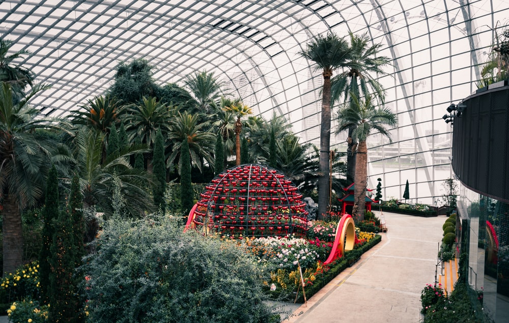 green palm trees inside greenhouse