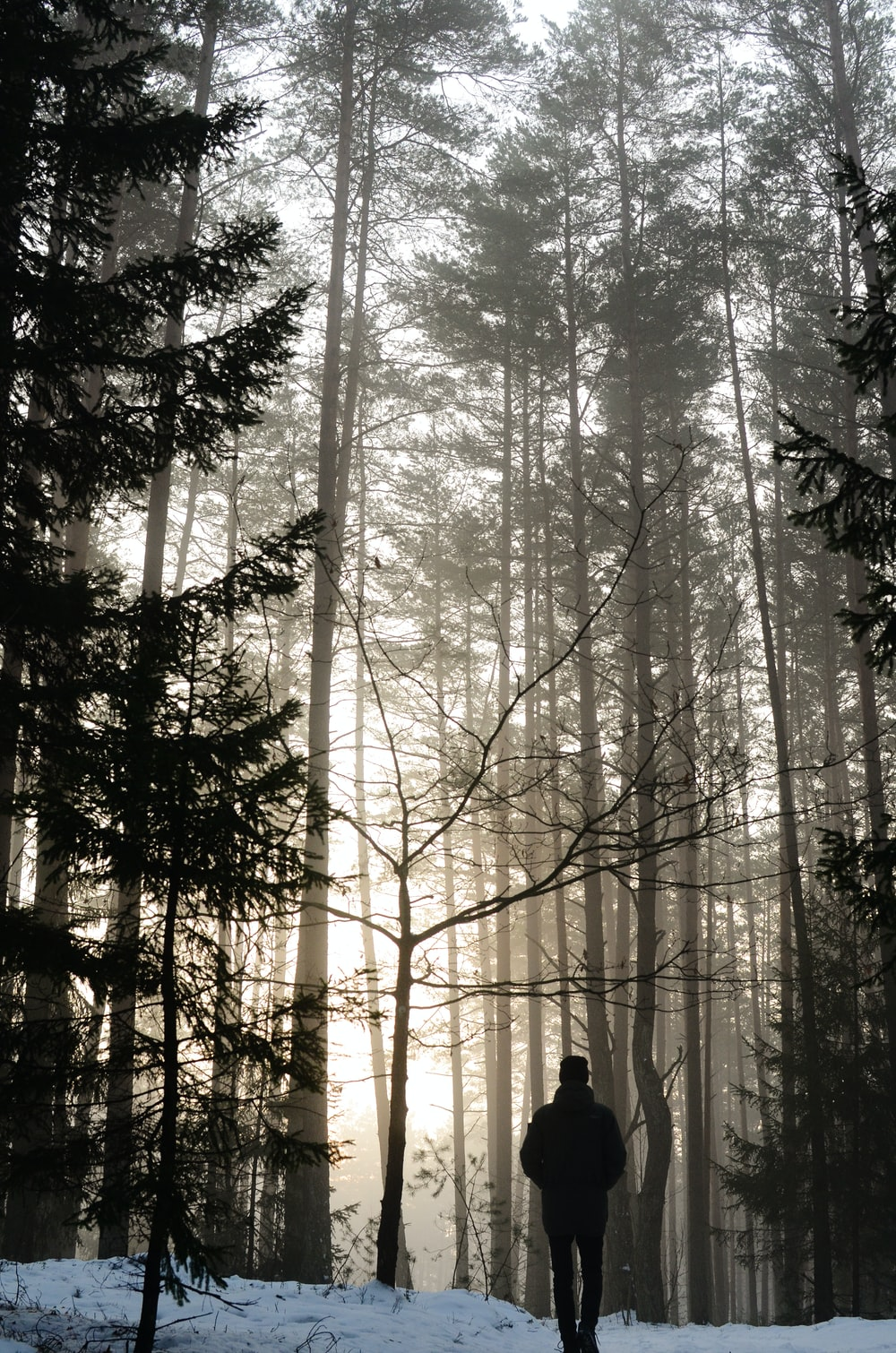 person standing in the middle of the forest during daytime