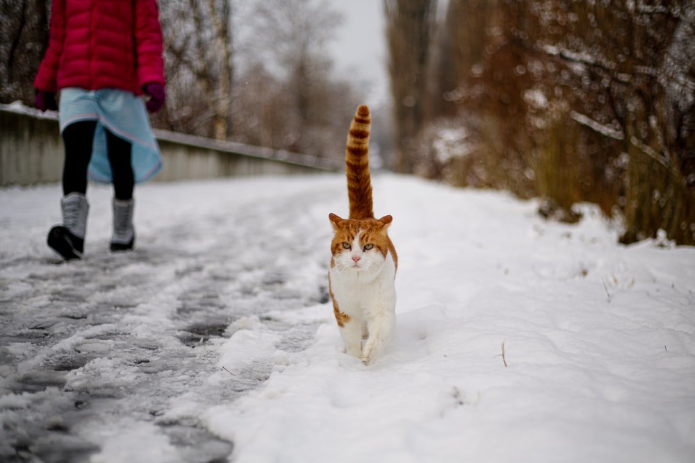 orange and white cat on snow covered ground during daytime