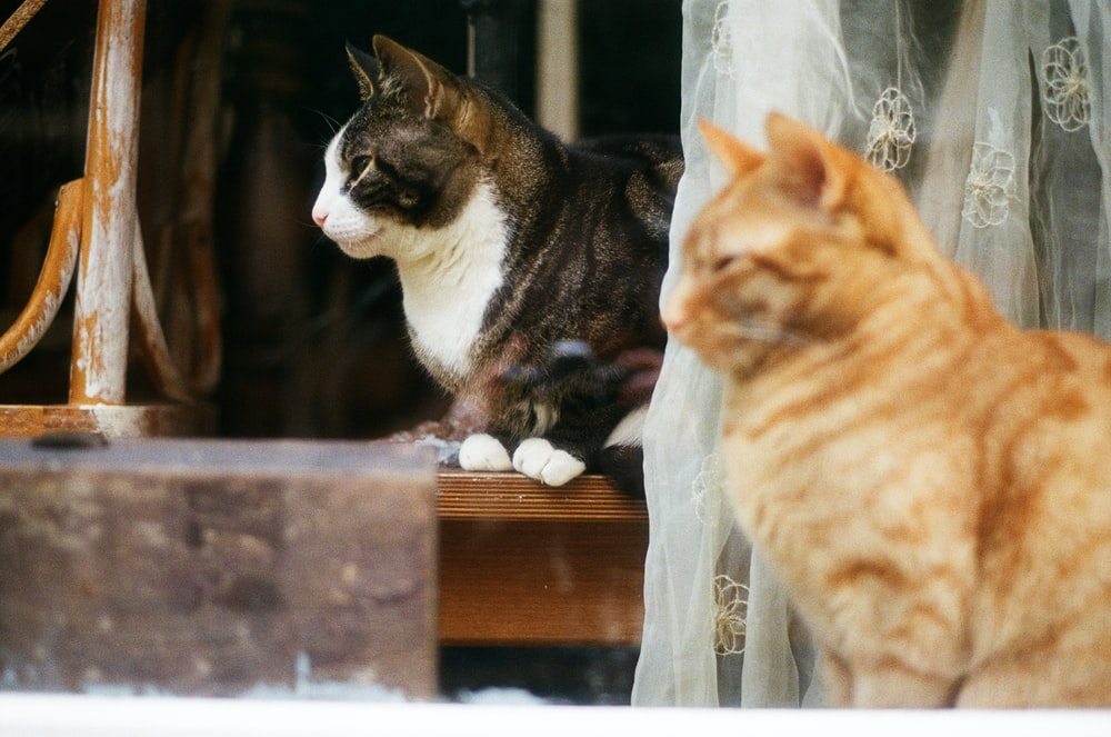 orange tabby cat and brown tabby cat on brown wooden table