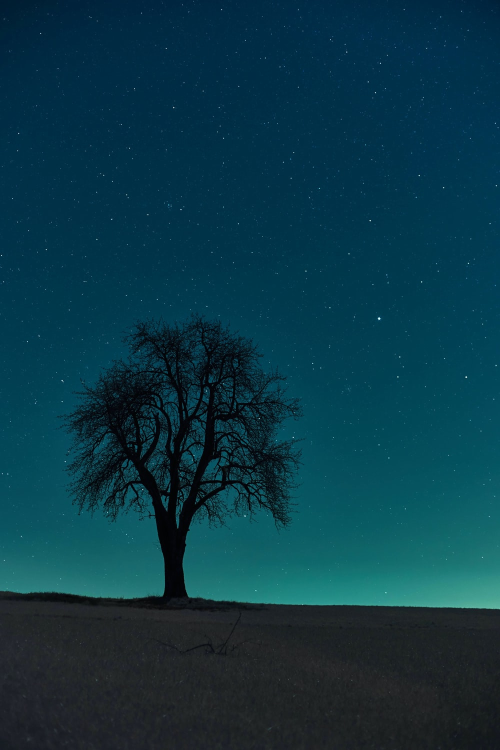 tree under blue sky during night time