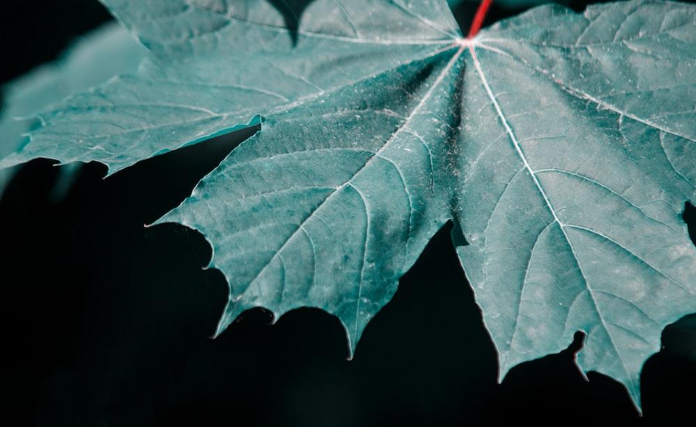 green leaf in black background