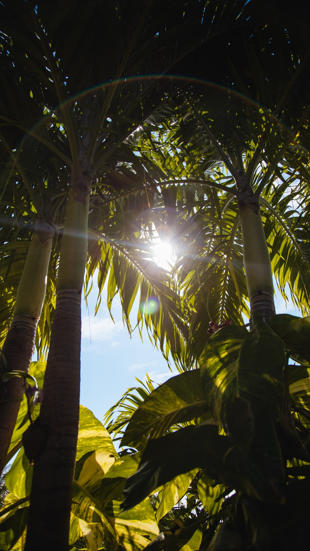 green coconut tree under blue sky during daytime