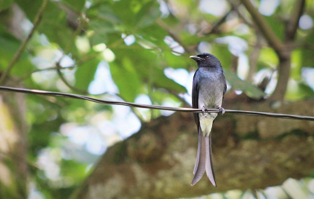 black and gray bird on tree branch