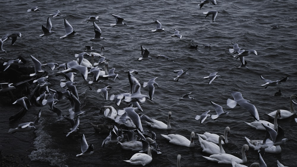 flock of white birds on water during daytime