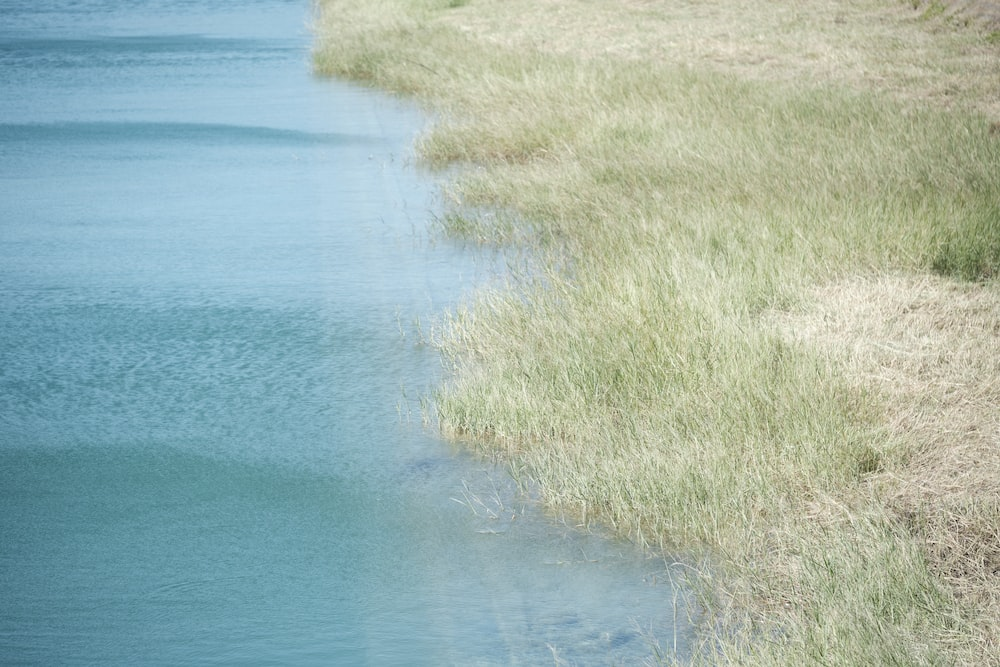 green grass beside blue body of water during daytime
