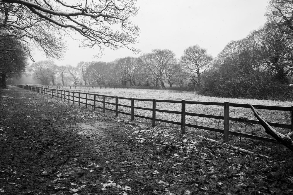 grayscale photo of wooden fence near trees