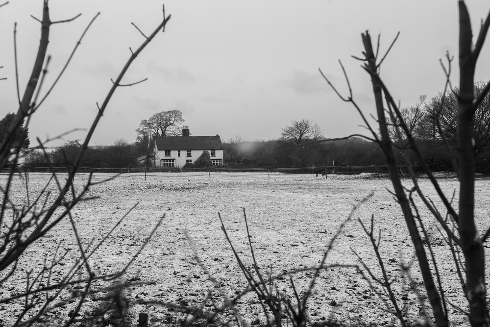 grayscale photo of bare trees near house