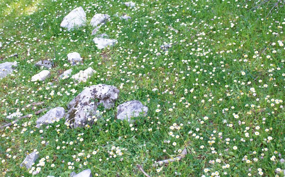gray rocks on green grass field