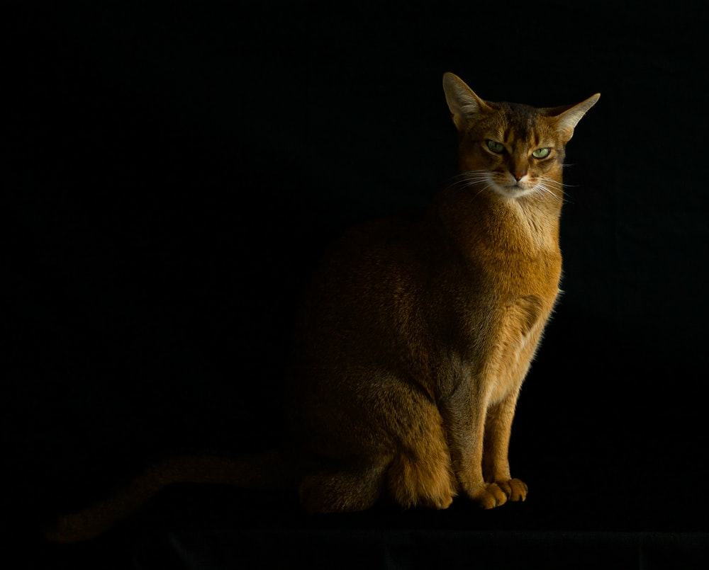 orange tabby cat on black surface