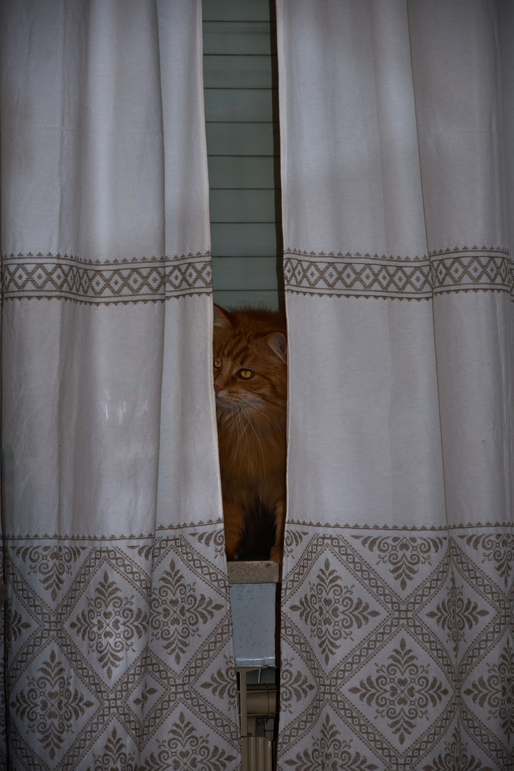 brown cat on white and blue floral curtain
