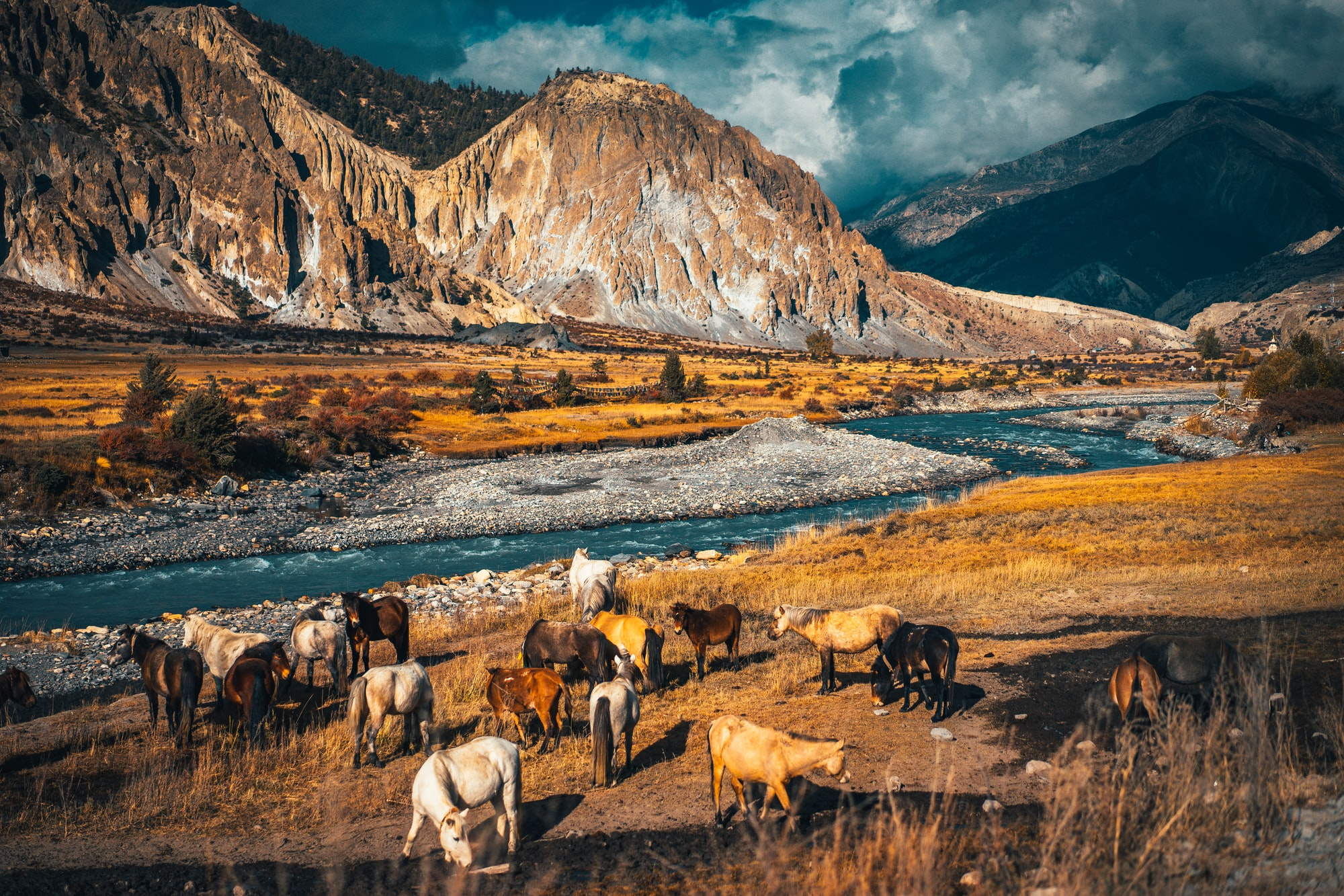 Horses and Sunset above valley in the Himalaya mountains, Nepal