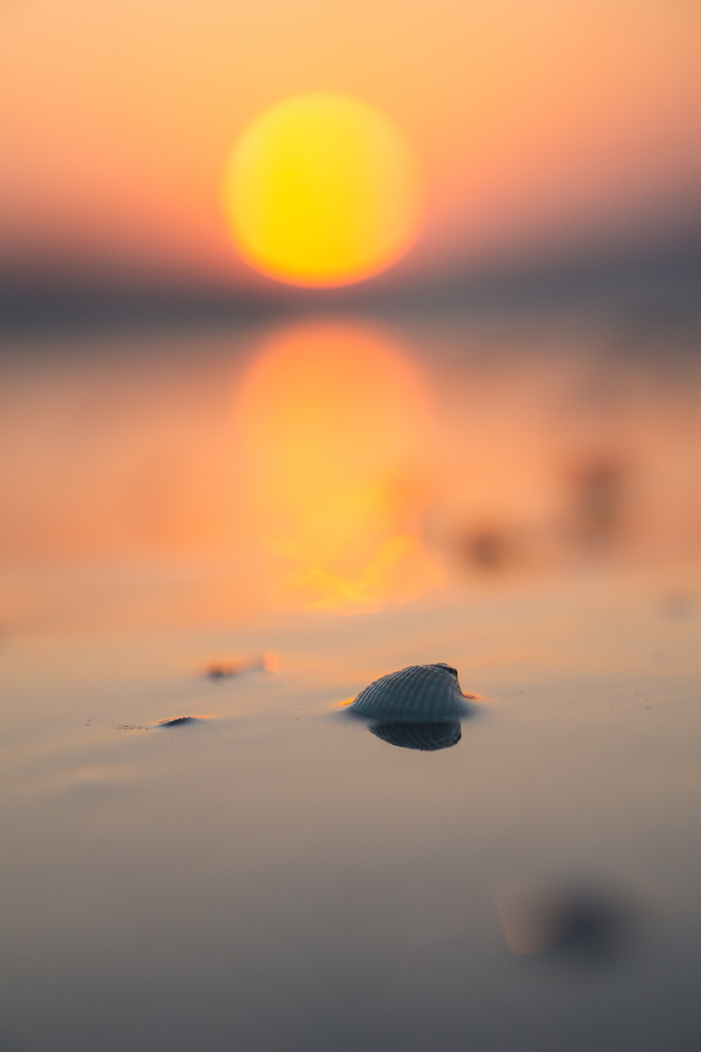 black sea shell on shore during sunset