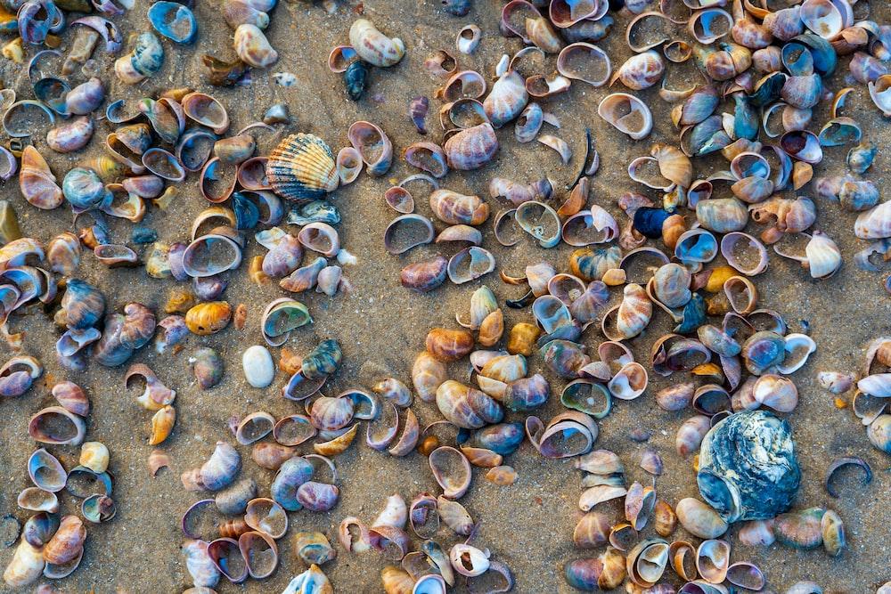 brown and gray seashells on gray sand