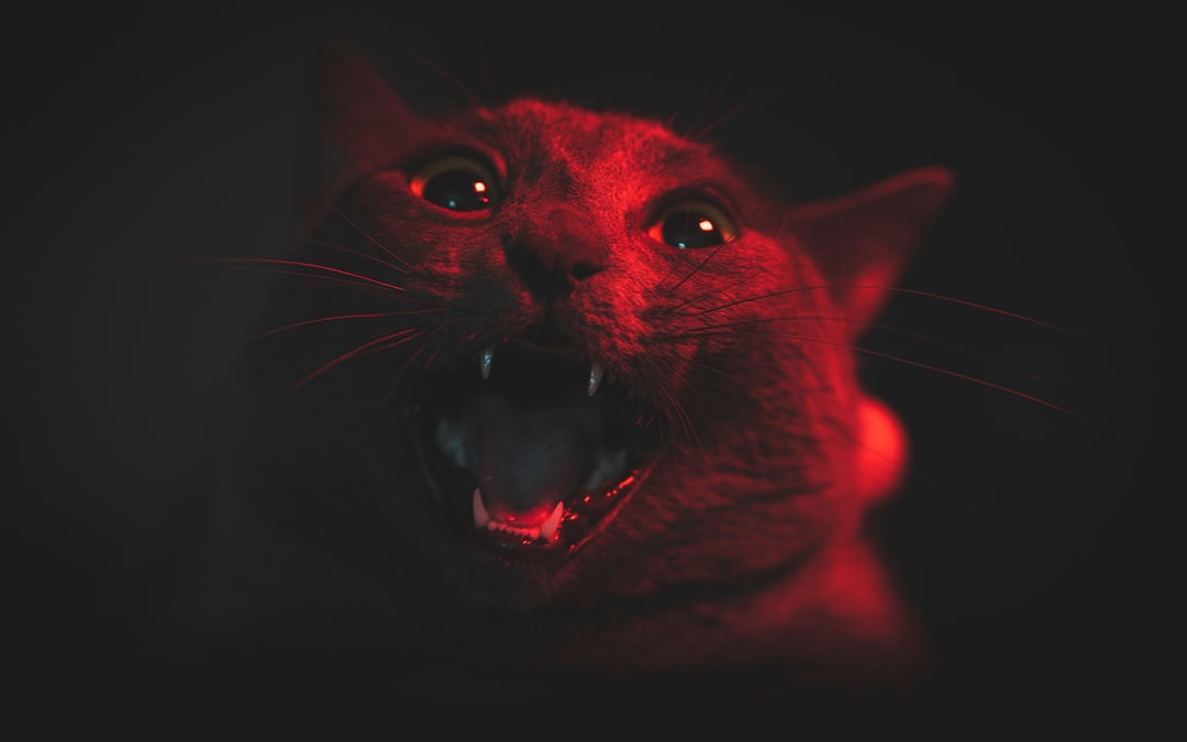 Orange Cat With Mouth Open - unsplash