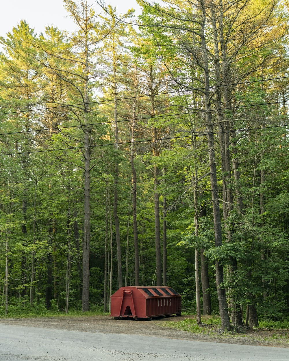 red and brown wooden shed in the middle of forest during daytime