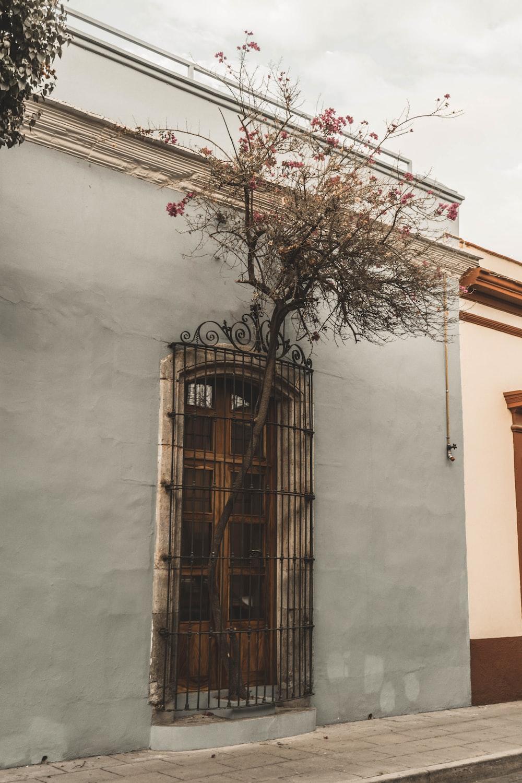 brown bare tree beside brown wooden door