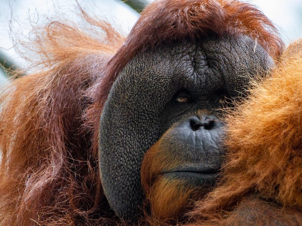 brown monkey lying on green textile