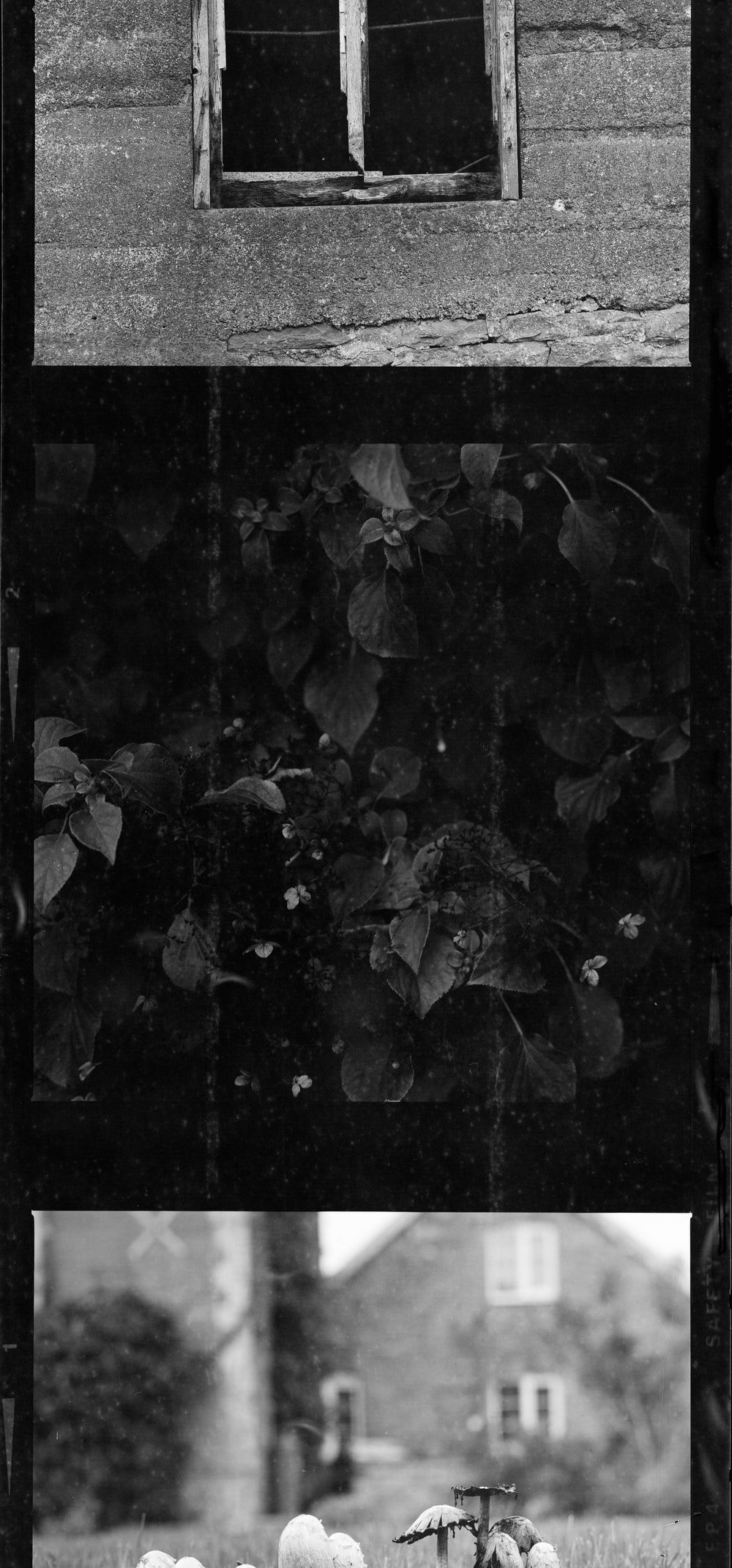 greyscale photo of leaves on the ground