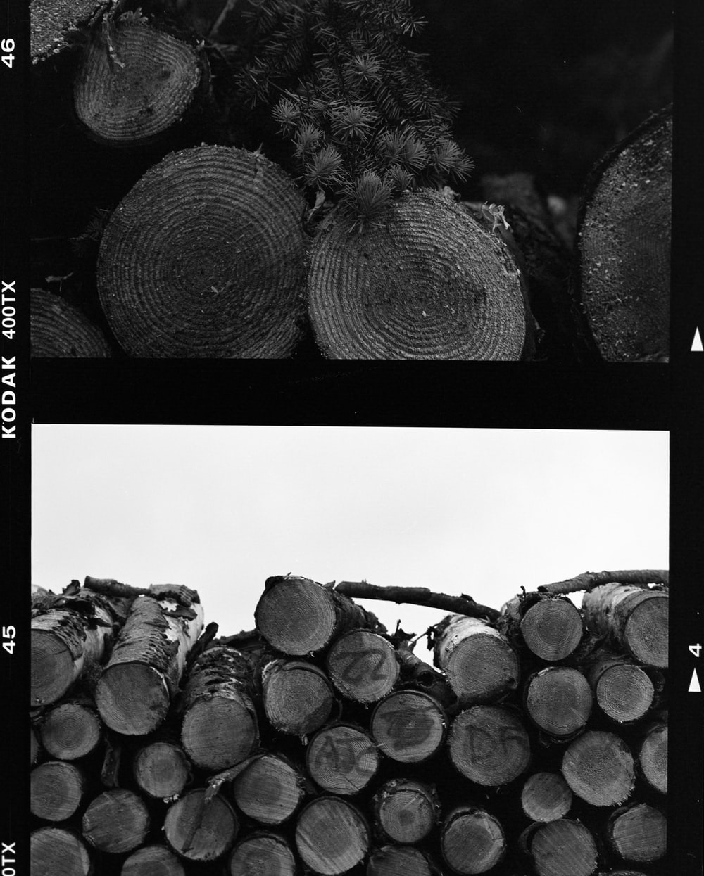 grayscale photo of pile of wood logs