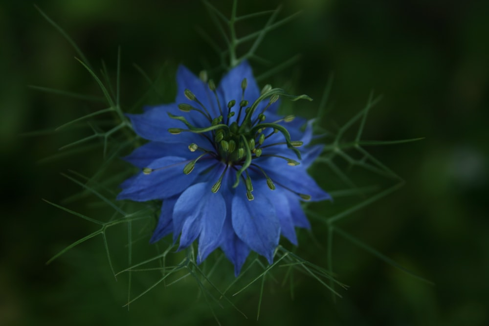 blue flower in macro lens