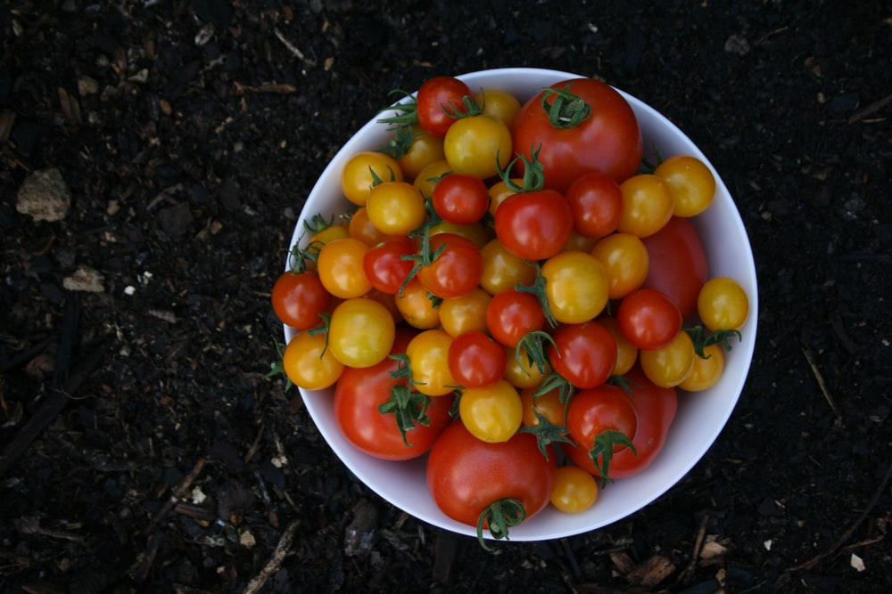 red and yellow tomatoes on white ceramic bowl