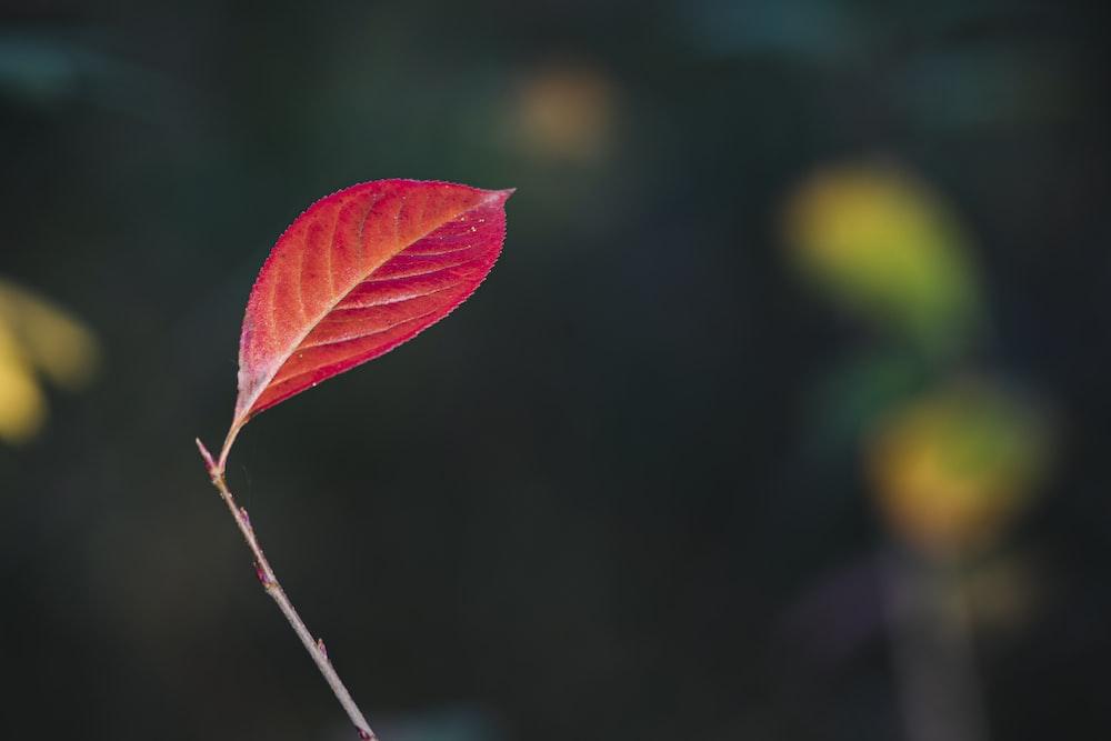 green and red leaves in tilt shift lens