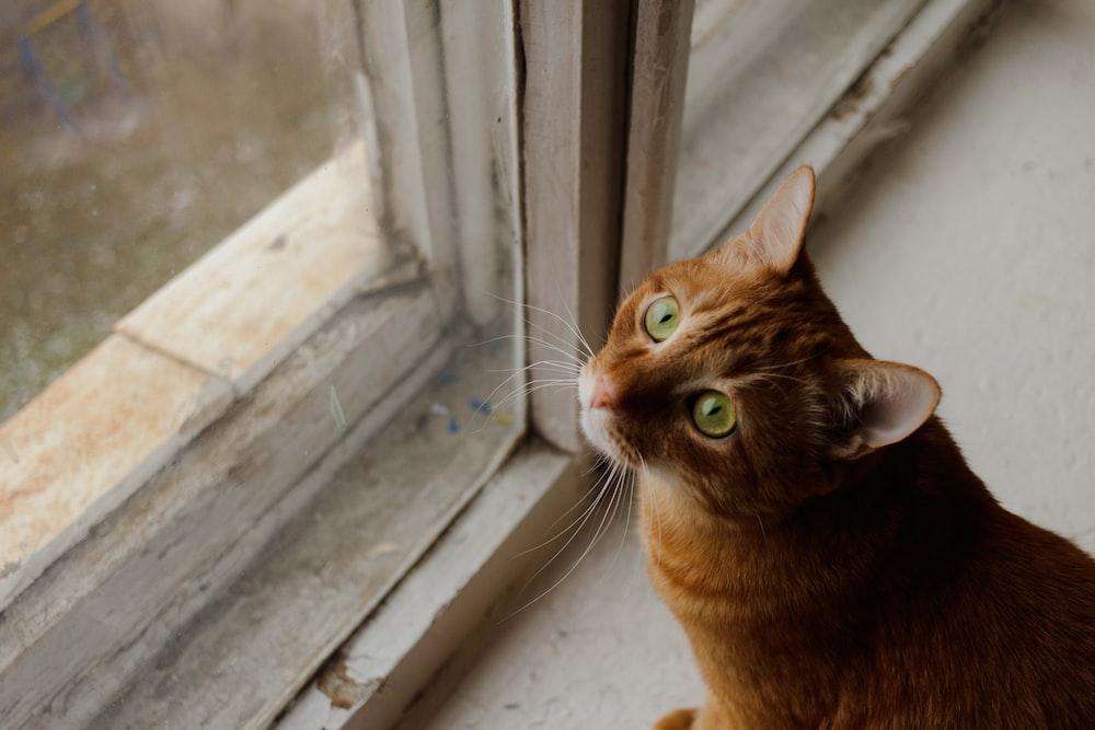 brown cat near white wooden window