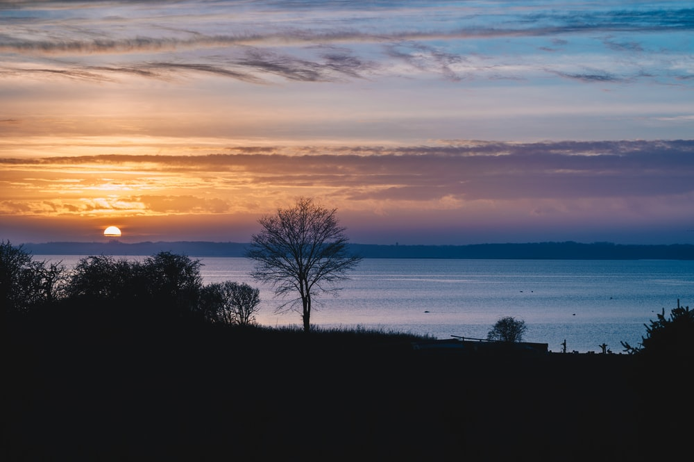 silhouette of tree near body of water during sunset