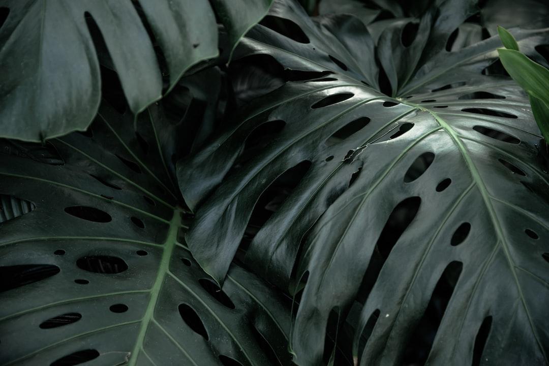 Green Leaf Plant During Daytime - unsplash