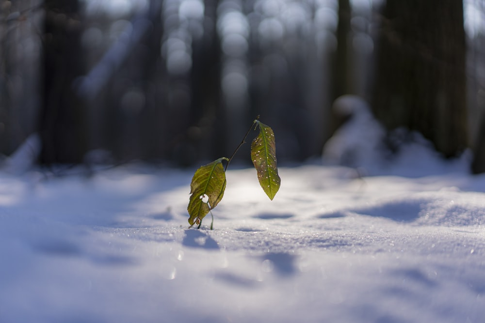 green leaf on snow covered ground during daytime