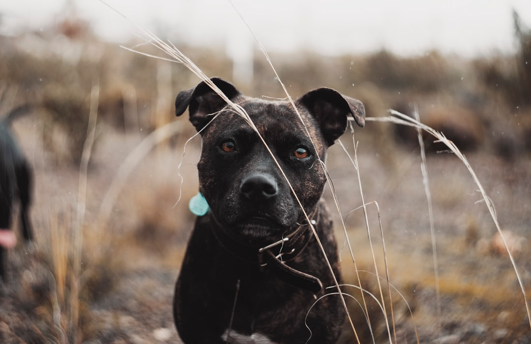 Black Short Coated Dog On Brown Grass Field During Daytime - unsplash