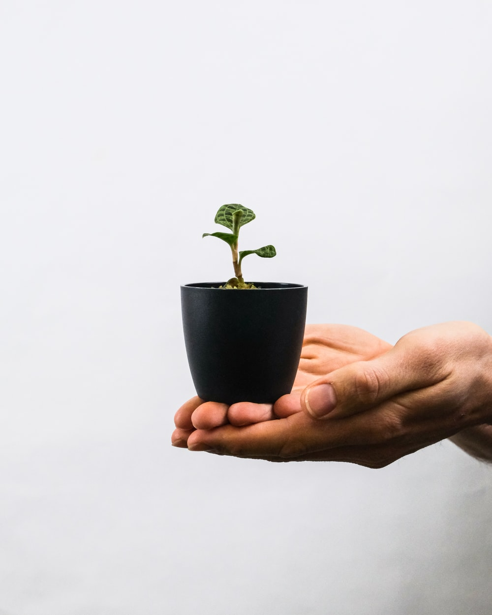 person holding green plant on blue pot