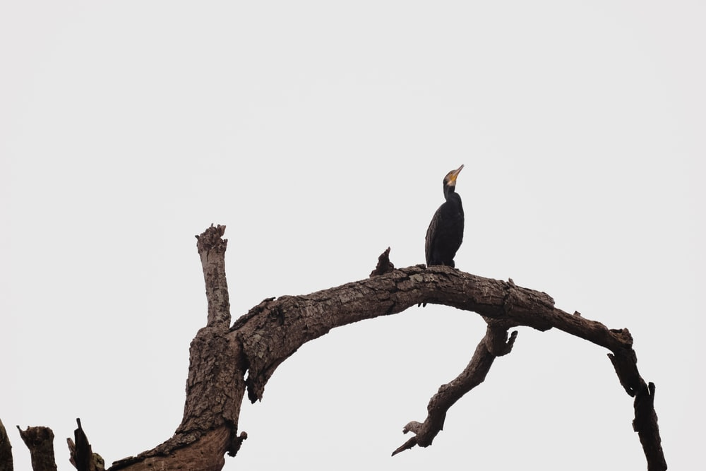 black and yellow bird on brown tree branch