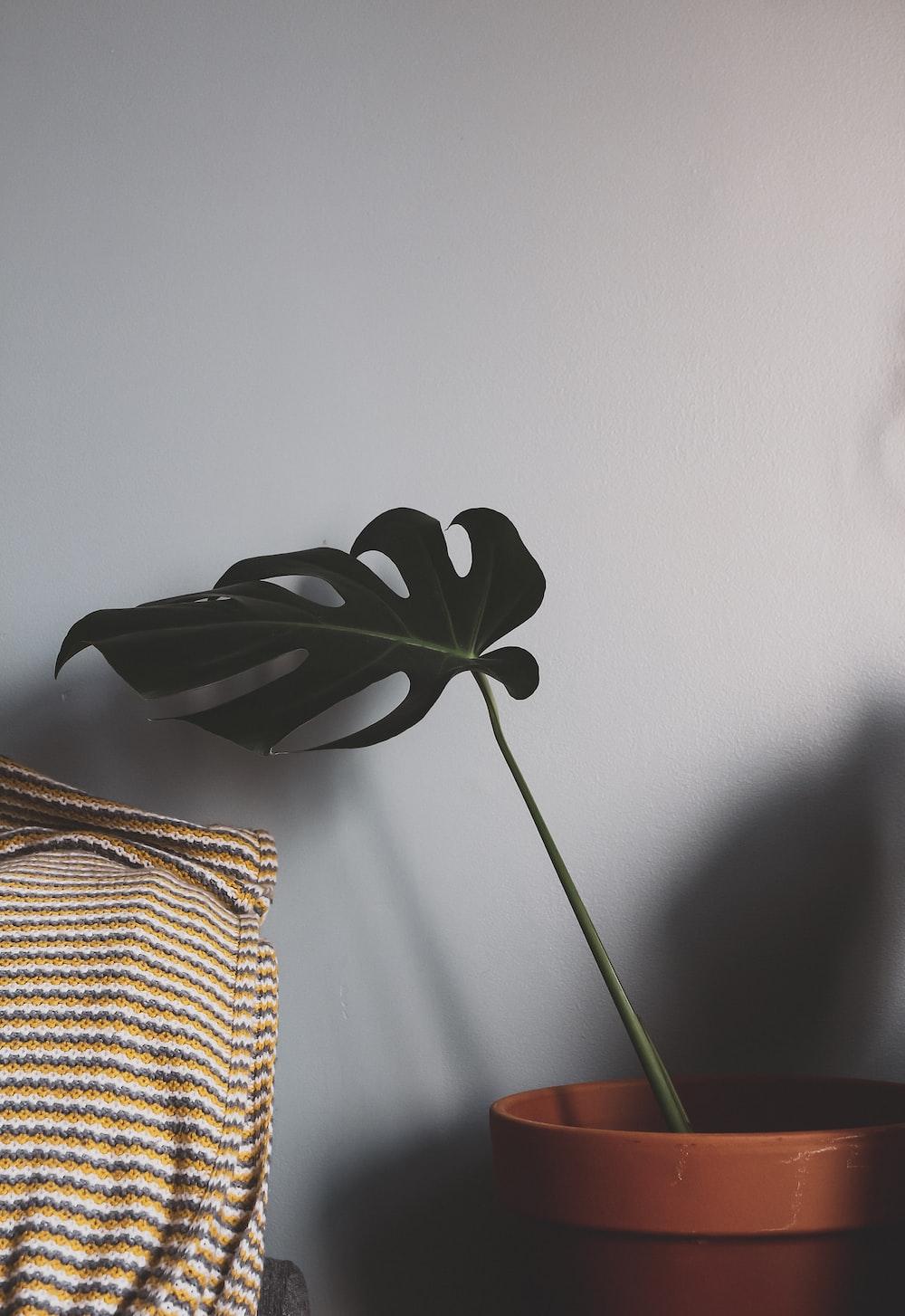 green plant in brown wicker basket
