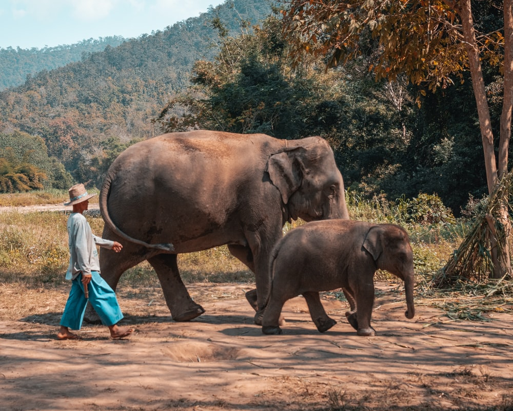 woman in white shirt and blue pants standing beside brown elephant during daytime