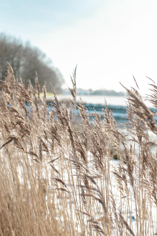 white grass field during daytime