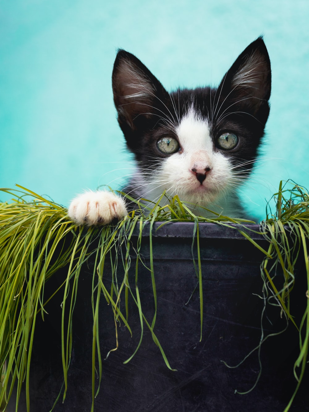 black and white cat on black pot