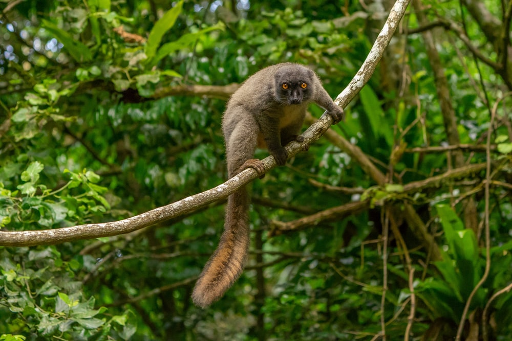 brown and gray monkey on tree branch during daytime