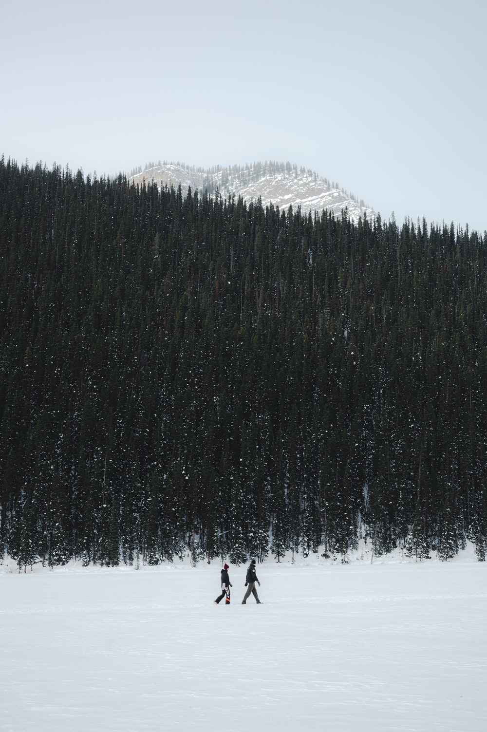 person walking on snow covered ground near green trees during daytime
