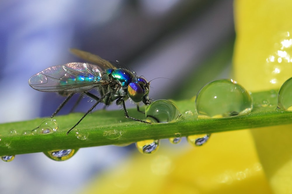 green fly perched on green leaf in close up photography