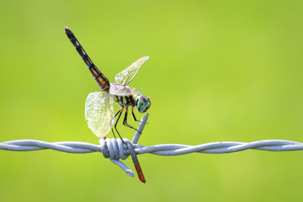 brown and black dragonfly perched on green plant in close up photography during daytime