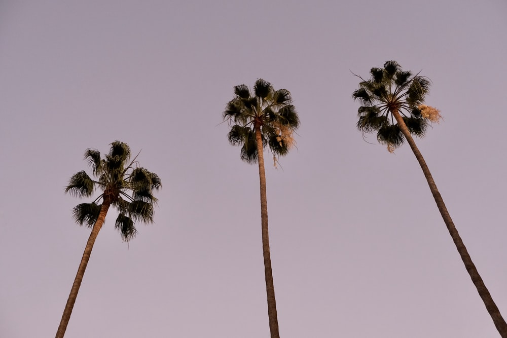 three green palm trees under blue sky during daytime