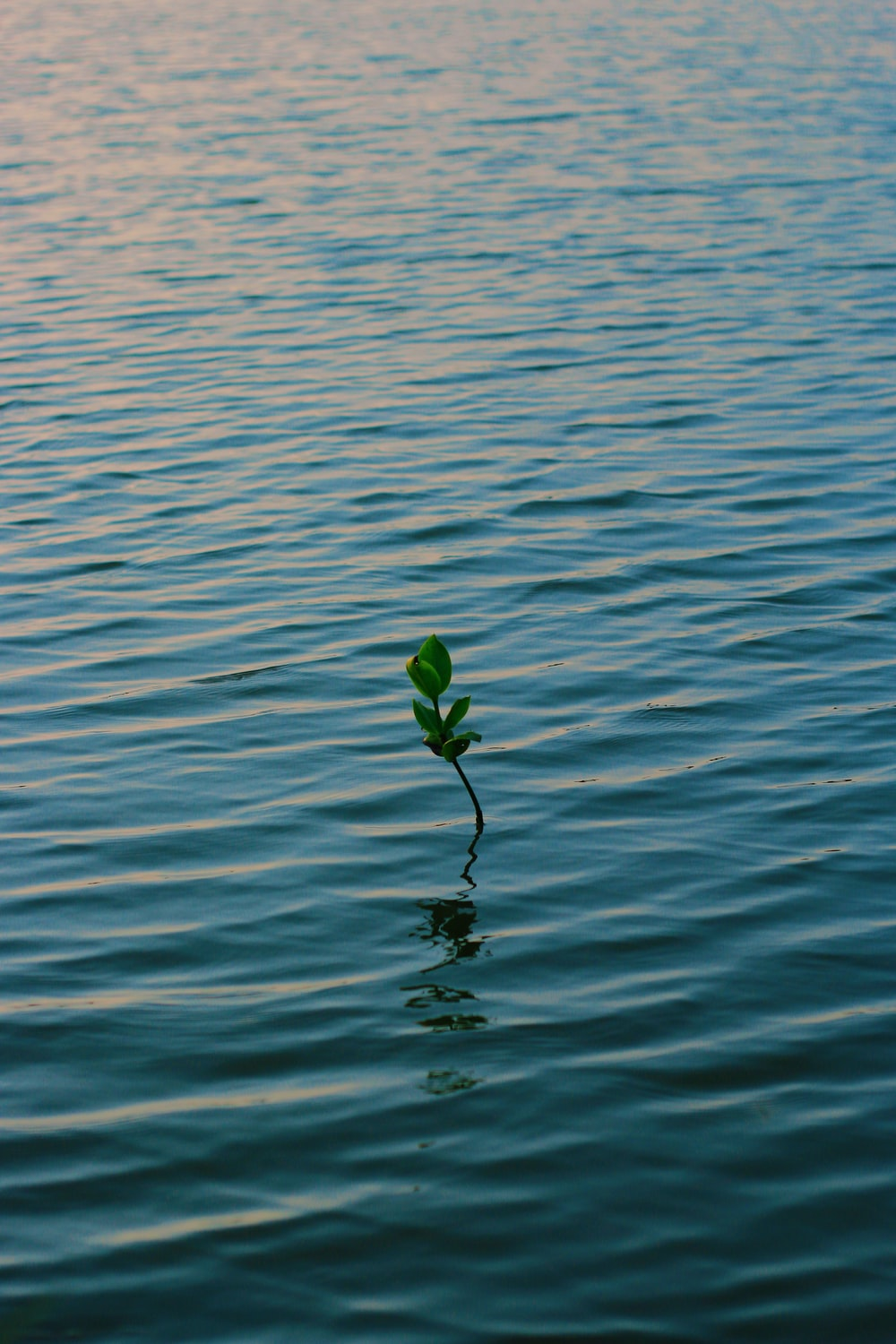 green plant on body of water during daytime