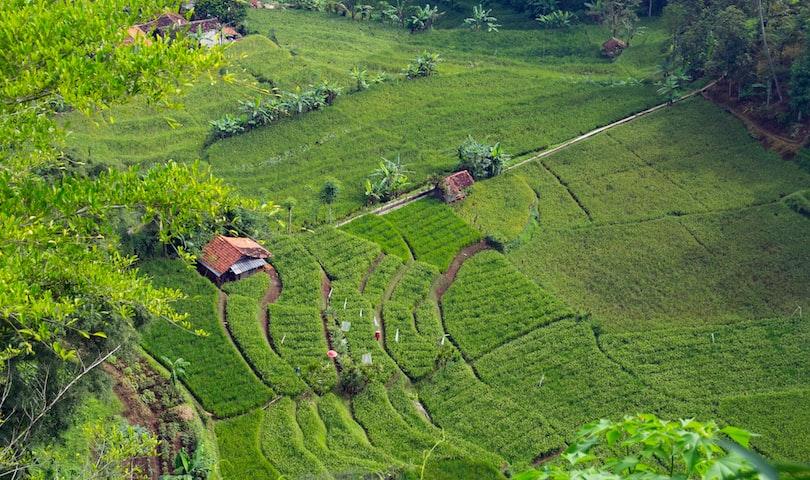 Green Tea: Natures Miracle Heath Drink